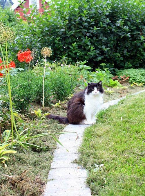 Lettstelt og fin hage